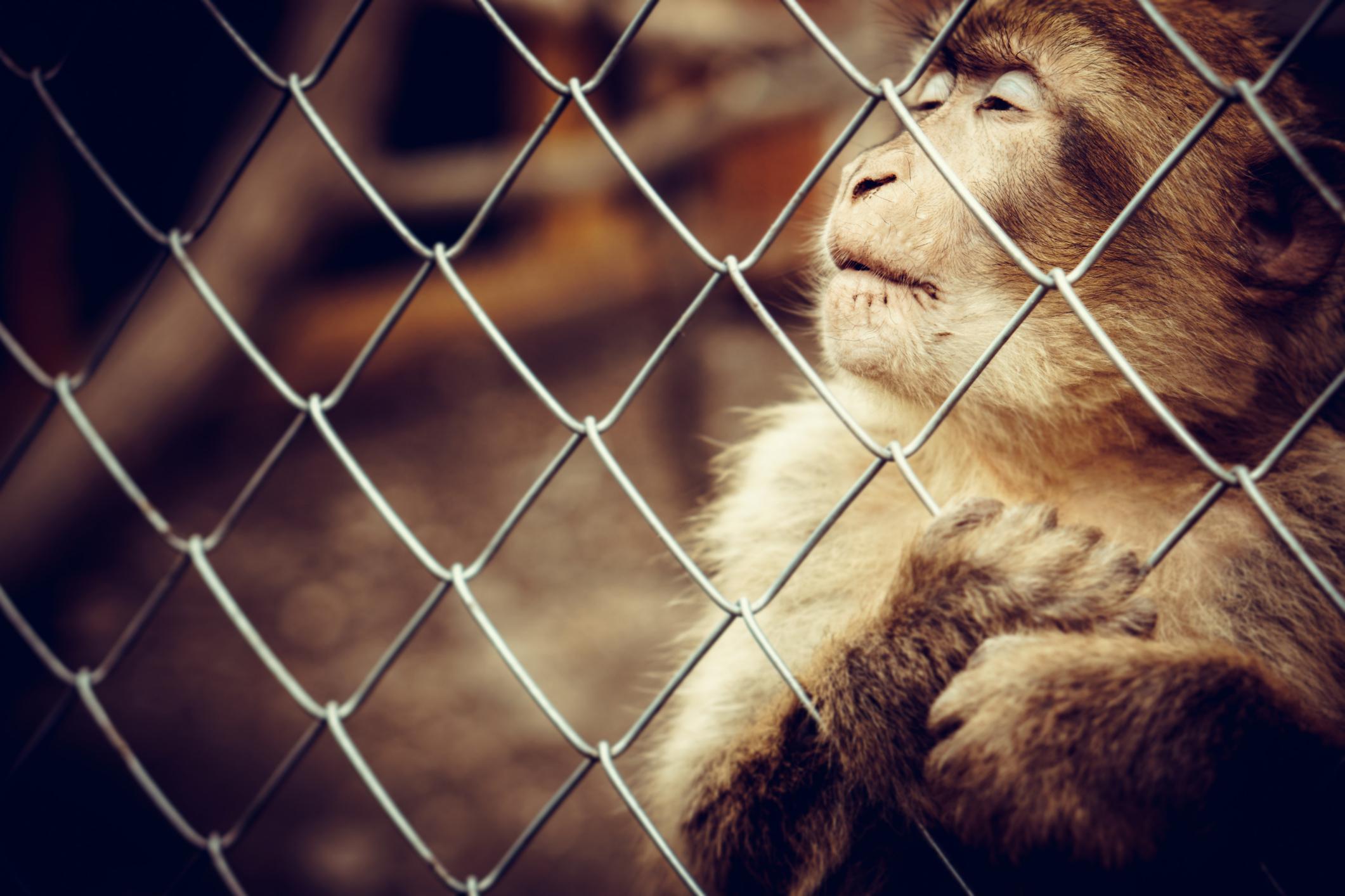 buddhism återfödelse djur